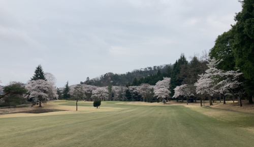 sakura-12.JPG