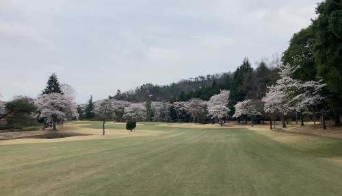 sakura-2.JPG