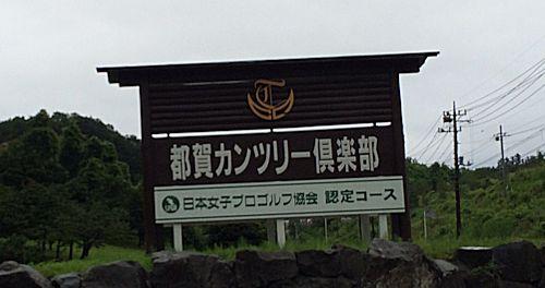 tsuga-1.jpg